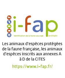 ifap.png